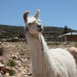 Bolivian wildlife