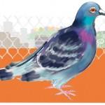 "Celia Witchard ""Urban Pigeon"""